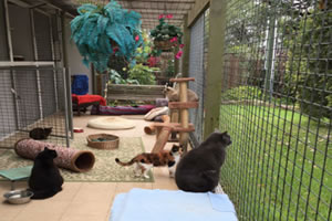 Cattery at northern beaches smallpaws